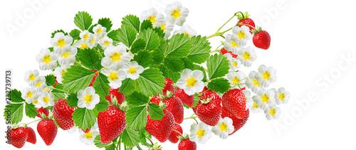 Poster Fruit tasty fresh strawberries isolated on white