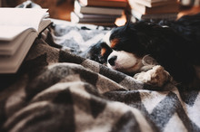 Cozy Winter Home With Dog Slee...