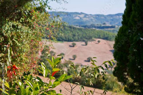 Fotografie, Obraz  Panorama di campagna umbra