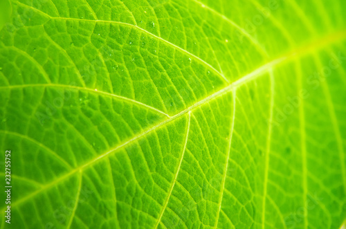 Türaufkleber Makrofotografie leaf macro
