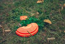 Broken Orange Flying Plate Lyi...