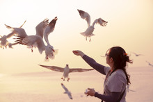 A Woman Feeding Seagulls By He...