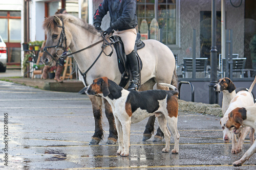 Foxhound hunt pack and horse