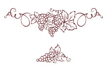 Grapes / Vector Illustration, ...