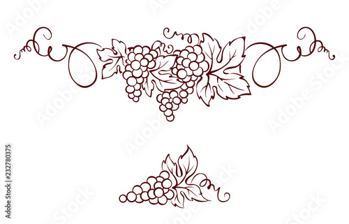 Grapes / Vector illustration, vintage design element Fototapeta