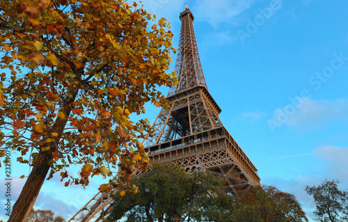 Poster de jardin Tour Eiffel The Eiffel tower and autumnal tree in the foreground.