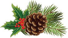 Vector Christmas Tree Branch With Pine Cones And Mistletoe