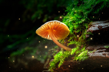 Glowing small mushroom and fireflies in magical forest