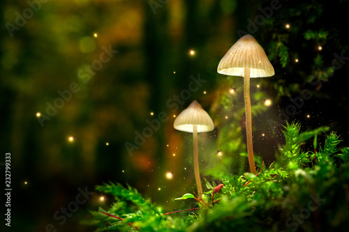 Carta da parati Glowing mushroom lamps with fireflies in magical forest