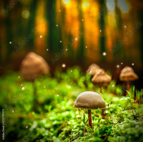 Small mushrooms on moss and fireflies in forest at dusk