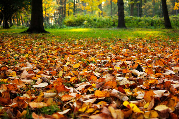 golden leaves on the ground in autumn park