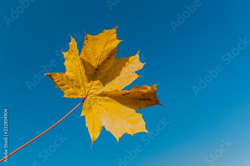 Fototapeta Jesienny kolorowy liść obraz
