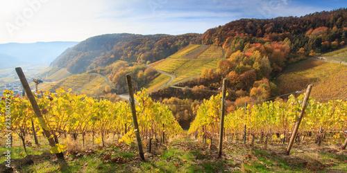 Valokuva  Weinberge bei Dernau an der Ahr im Herbst