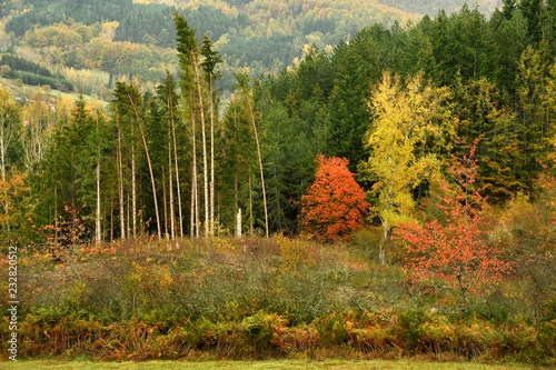colorful forest during autumn season on the Tuscany mountains in Italy.