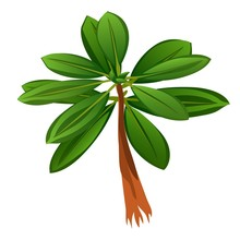 Tropical Tree With Green Leaves Isolated On White Background. Vector Cartoon Close-up Illustration.