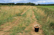 the road in the field on which there is a black plastic bucket with mushrooms, the sky is gloomy
