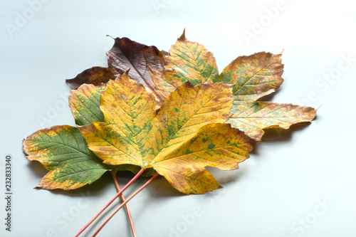 Fotografie, Obraz  Falling leaves as decoration objects