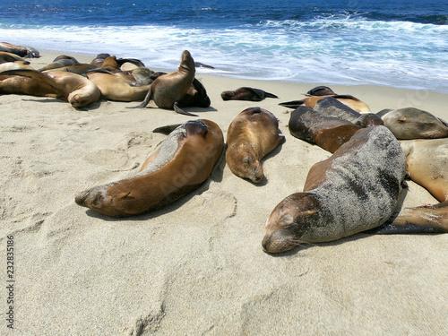 Fotografia  foki i lwy morskie
