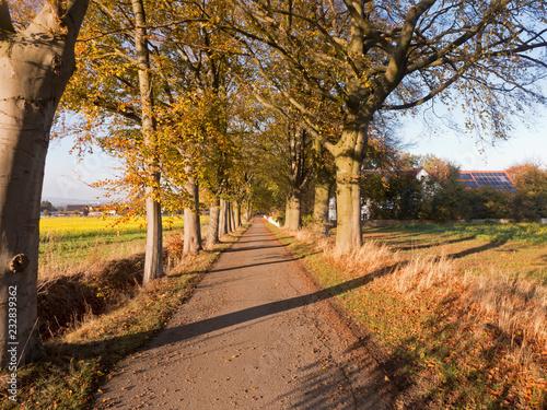 Tuinposter Smal steegje Ein Herbstspaziergang durch eine kleine schmale Allee in der nähe von Bünde im Norden von Deutschland