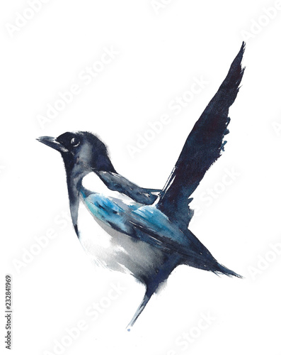 Bird  magpie black and white watercolor painting illustration isolated on white Wallpaper Mural
