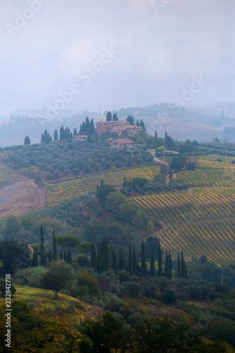 Poster Olive Beautiful Tuscany landscape near San Gimignano, Italy
