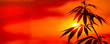 canvas print picture - Panorama of marijuana with blurred background at sunset. Silhouette of cannabis against the sky. Growing hemp. Copy space