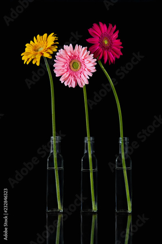 Staande foto Gerbera Three gerberas (species: Asteraceae) in glass vases on a black background.