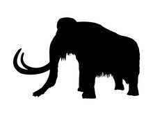 Vector Black Silhouette Of Prehistoric Wooly Mammoth With Tusks Isolated On A White Background