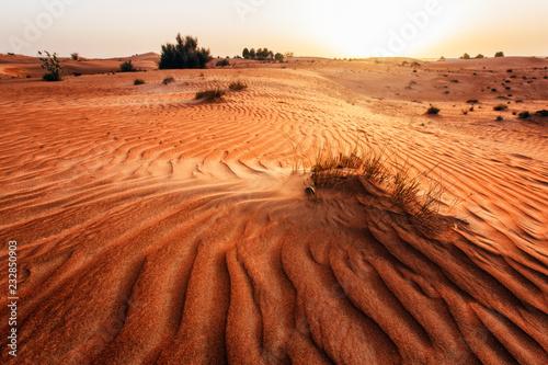 Keuken foto achterwand Zandwoestijn Sand dune in a desert. United Arab Emirates