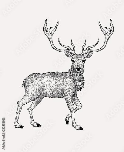 Hand drawn vintage deer illustration Wallpaper Mural