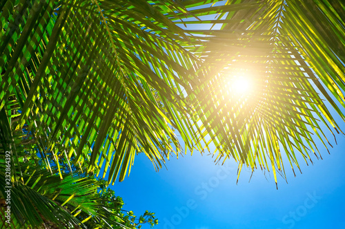 Palmier Palm leaves on blue sky background. weekend Holidays tropical beach concept background