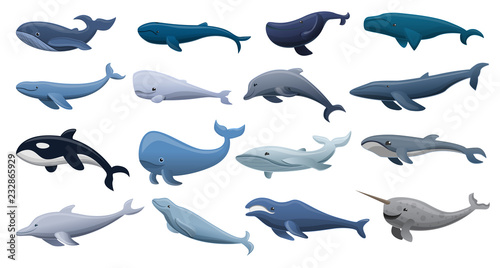 Fotografia, Obraz Whale icon set. Cartoon set of whale vector icons for web design