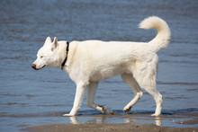 Wunderschöner Hund Am Meer/Strand