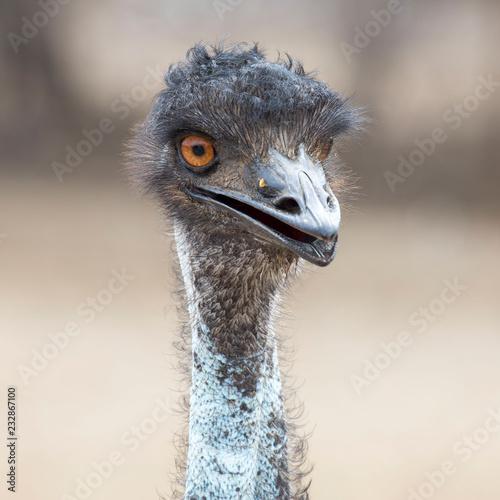 Staande foto Struisvogel Strauß - Kopf