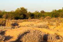 Meerkats In The Morning