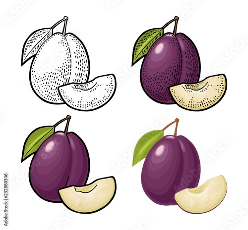 Fotografie, Obraz Whole and slice plum with seed and leaf. Vector vintage engraving