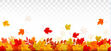 Autumn Nature Panorama With Colorful Leaves. Vector