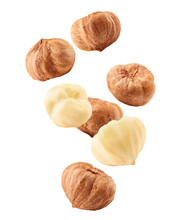 Falling Hazelnut Peeled, Isolated On White Background, Clipping Path, Full Depth Of Field