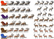 Collection of different species of red deer and deer sleds