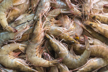 Group Of Fresh White Shrimp In Market