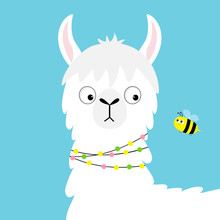 Llama Alpaca Face Looking At Bee. Childish Baby Collection. Cute Cartoon Funny Kawaii Character. Fluffy Hair Fur. T-shirt, Greeting Card, Poster Template Print. Flat Design. Blue Background.