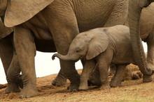 Tiny Newborn African Elephant ...