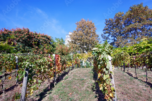 In de dag Parijs Belleville park vineyard in Paris
