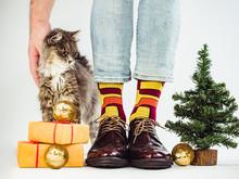 Cute Kitten, Men's Legs In Col...