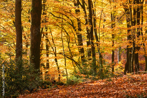 A romantic and fairytale autumn forest, Lüneburger Heide, Northern Germany