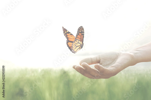 Ingelijste posters Vlinder colorful butterfly leans confident on a woman's hands