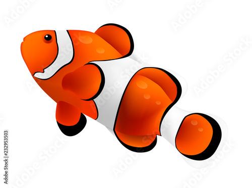 Vászonkép Clown fish isolated on white background. Vector illustration