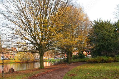 Spoed Foto op Canvas Bomen Trees in beautiful fall colours