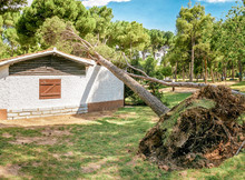 A Large Pine Tree Falls On A R...