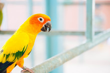Lovely Orange Parrot